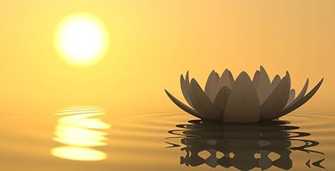 Foto de uma flor de lotus na agua e um sol ao fundo com um céu alaranjado.